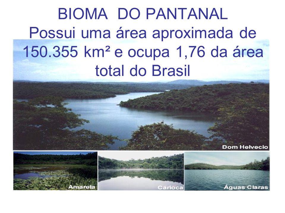 BIOMA DO PANTANAL Possui uma área aproximada de 150.355 km² e ocupa 1,76 da área total do Brasil