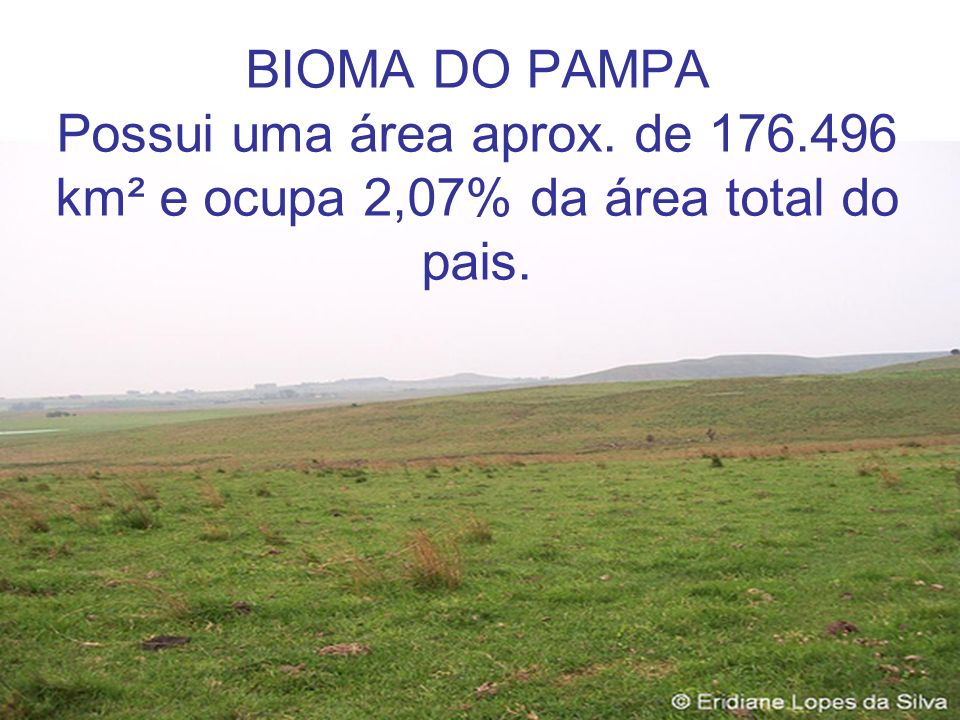 BIOMA DO PAMPA Possui uma área aprox. de 176.496 km² e ocupa 2,07% da área total do pais.