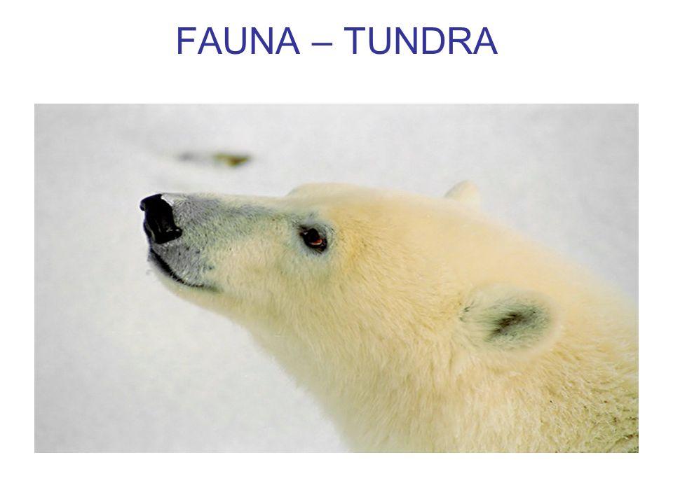 FAUNA – TUNDRA