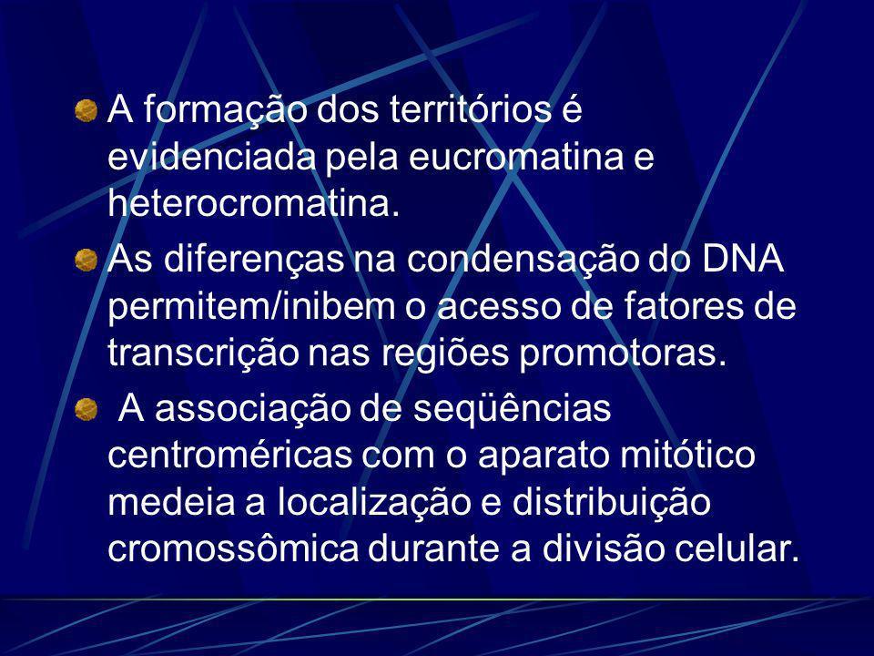 A formação dos territórios é evidenciada pela eucromatina e heterocromatina. As diferenças na condensação do DNA permitem/inibem o acesso de fatores d