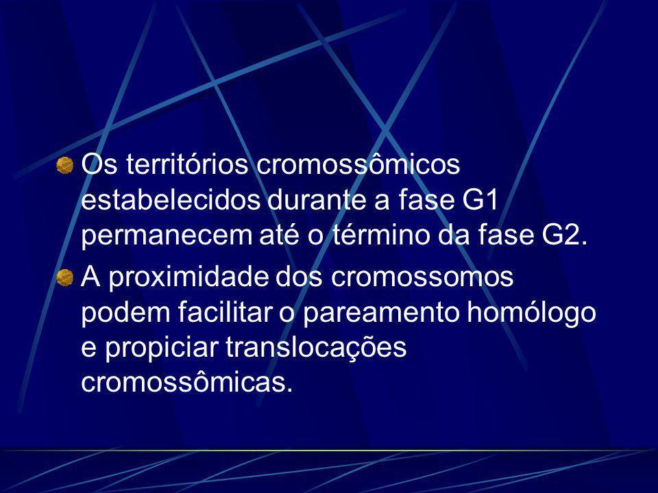 Os territórios cromossômicos estabelecidos durante a fase G1 permanecem até o término da fase G2. A proximidade dos cromossomos podem facilitar o pare