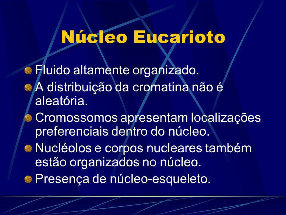 Núcleo Eucarioto Fluido altamente organizado. A distribuição da cromatina não é aleatória. Cromossomos apresentam localizações preferenciais dentro do
