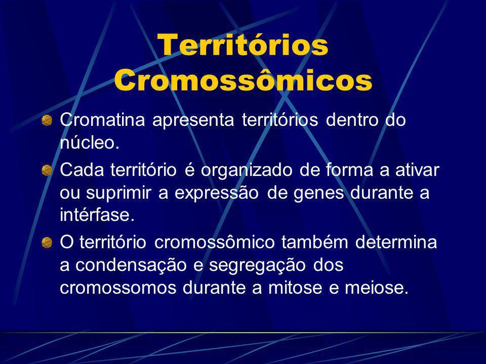 Territórios Cromossômicos Cromatina apresenta territórios dentro do núcleo. Cada território é organizado de forma a ativar ou suprimir a expressão de