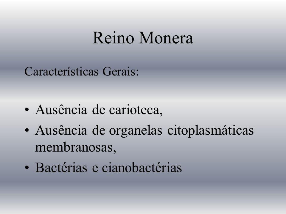 Reino Monera Características Gerais: Ausência de carioteca, Ausência de organelas citoplasmáticas membranosas, Bactérias e cianobactérias