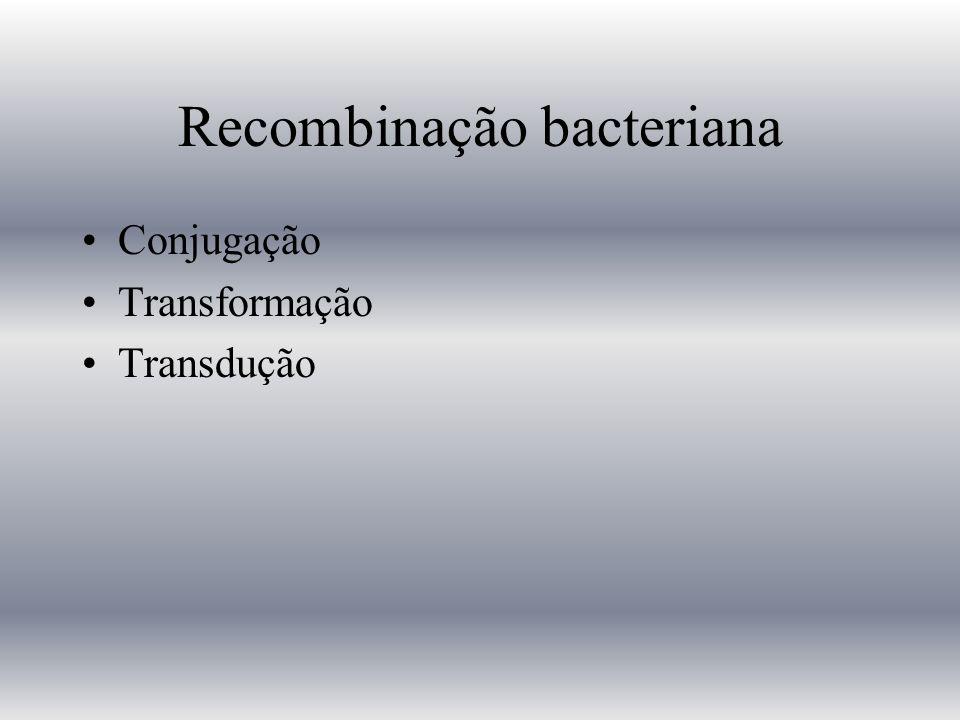 Recombinação bacteriana Conjugação Transformação Transdução