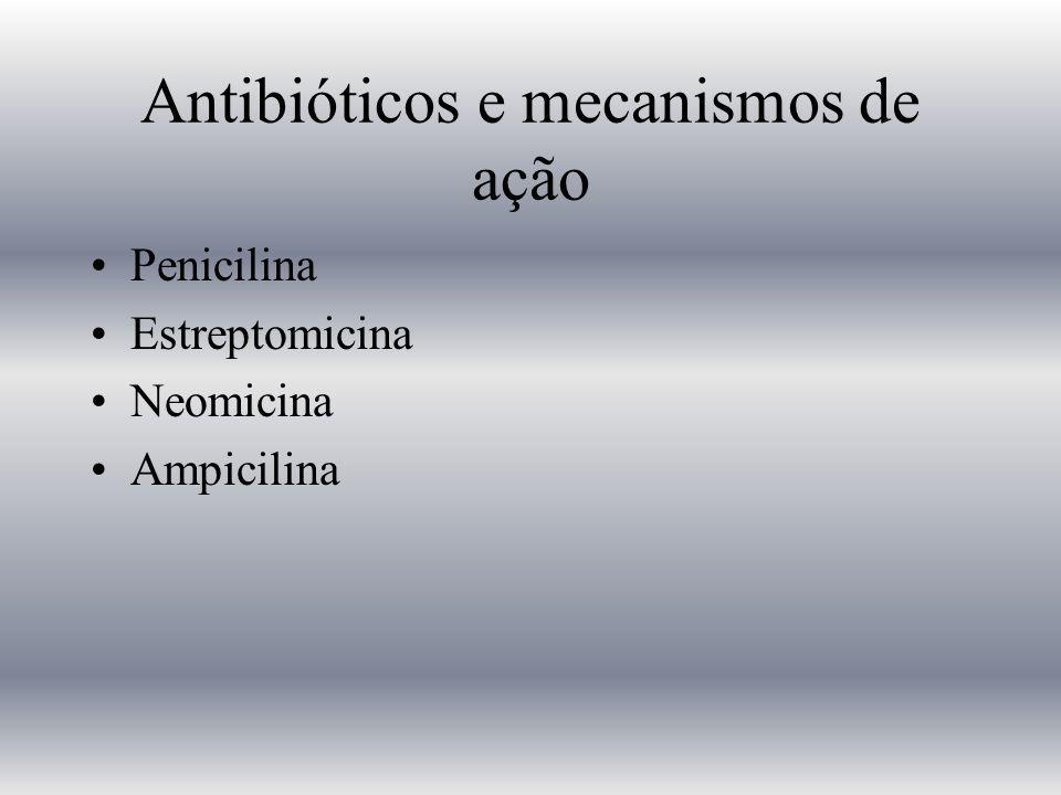 Antibióticos e mecanismos de ação Penicilina Estreptomicina Neomicina Ampicilina