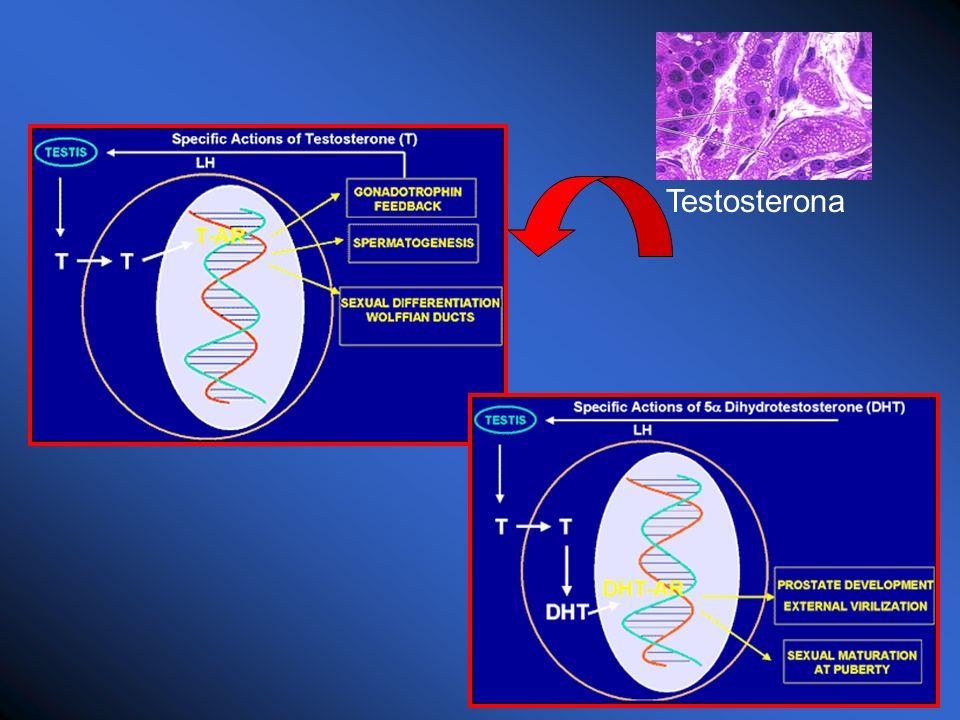 Receptores de Andrógenos