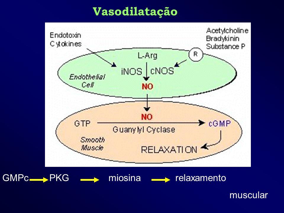 Vasodilatação GMPc PKG miosina relaxamento muscular