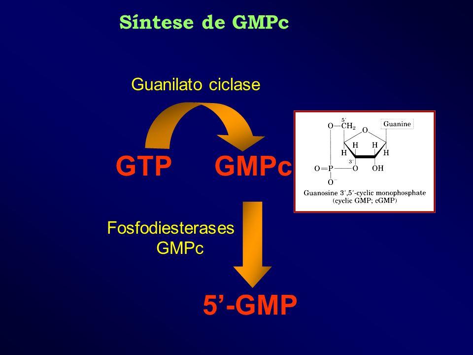 Fosfodiesterases GMPc GMPcGTP 5-GMP Guanilato ciclase Síntese de GMPc