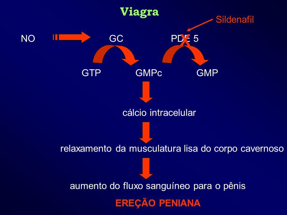 Viagra aumento do fluxo sanguíneo para o pênis EREÇÃO PENIANA NO GC PDE 5 GTP GMPc GMP relaxamento da musculatura lisa do corpo cavernoso cálcio intra