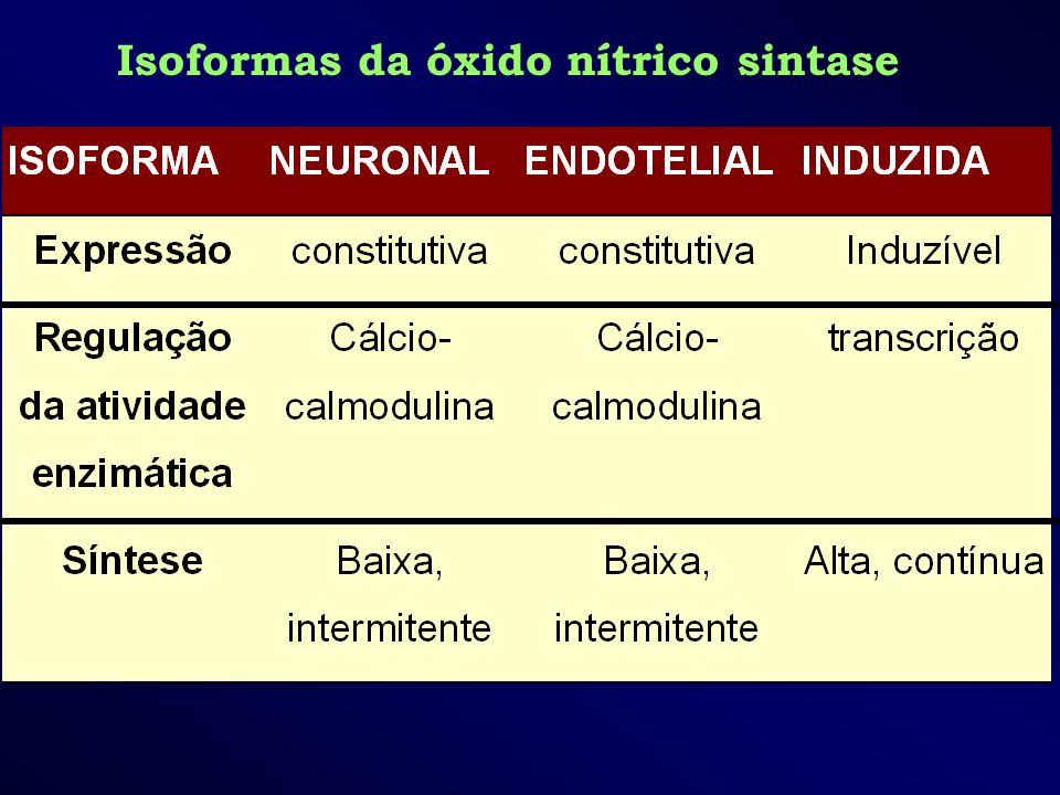 Isoformas da óxido nítrico sintase