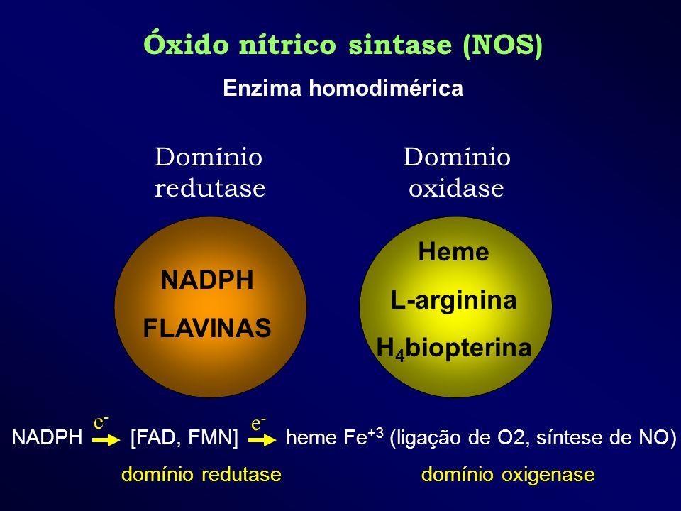 Óxido nítrico sintase (NOS) Enzima homodimérica NADPH FLAVINAS Domínio redutase Heme L-arginina H 4 biopterina Domínio oxidase NADPH [FAD, FMN] heme F
