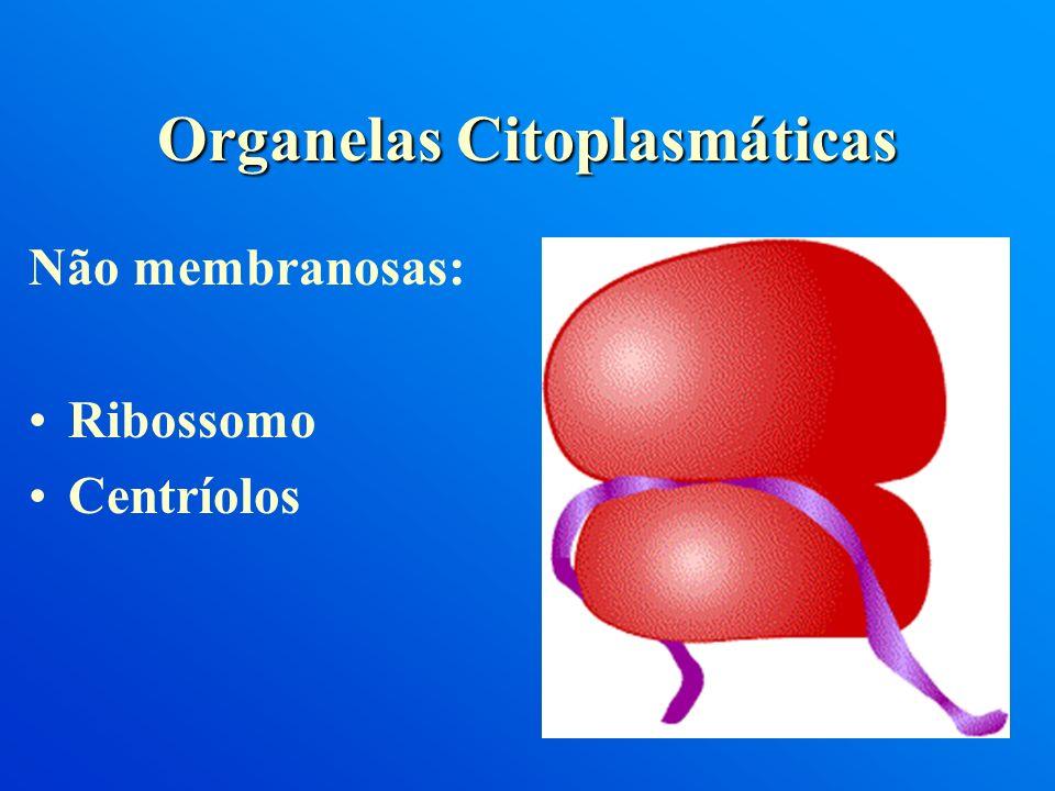 Não membranosas: Ribossomo Centríolos Organelas Citoplasmáticas