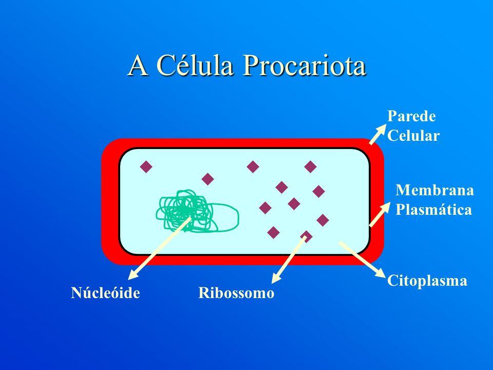 A Célula Procariota Parede Celular Membrana Plasmática Citoplasma RibossomoNúcleóide