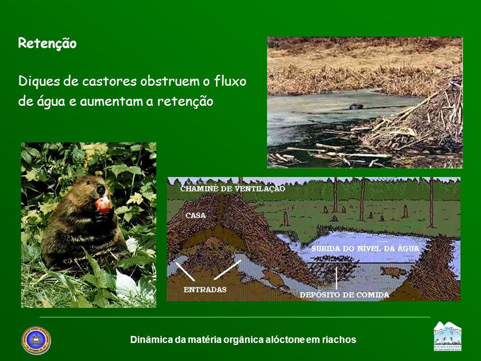Dinâmica da matéria orgânica alóctone em riachos Retenção Diques de castores obstruem o fluxo de água e aumentam a retenção