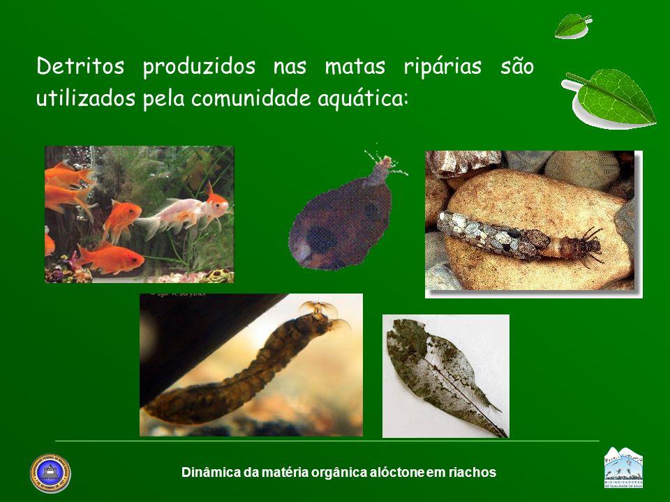 Dinâmica da matéria orgânica alóctone em riachos Detritos produzidos nas matas ripárias são utilizados pela comunidade aquática: