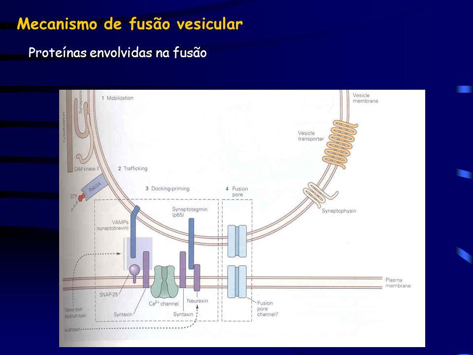 Proteínas envolvidas na fusão Mecanismo de fusão vesicular