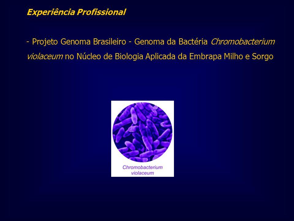 Experiência Profissional - Projeto Genoma Brasileiro - Genoma da Bactéria Chromobacterium violaceum no Núcleo de Biologia Aplicada da Embrapa Milho e
