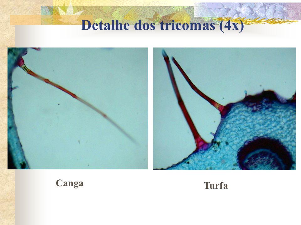 Detalhe dos tricomas (4x) Canga Turfa