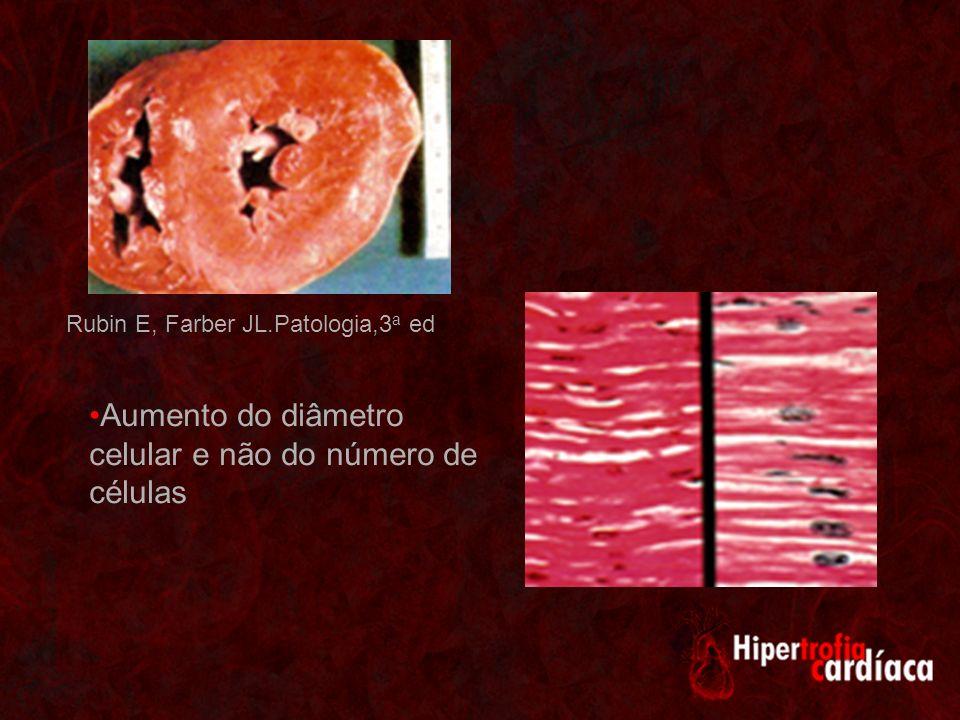 Aumento do diâmetro celular e não do número de células Rubin E, Farber JL.Patologia,3 a ed