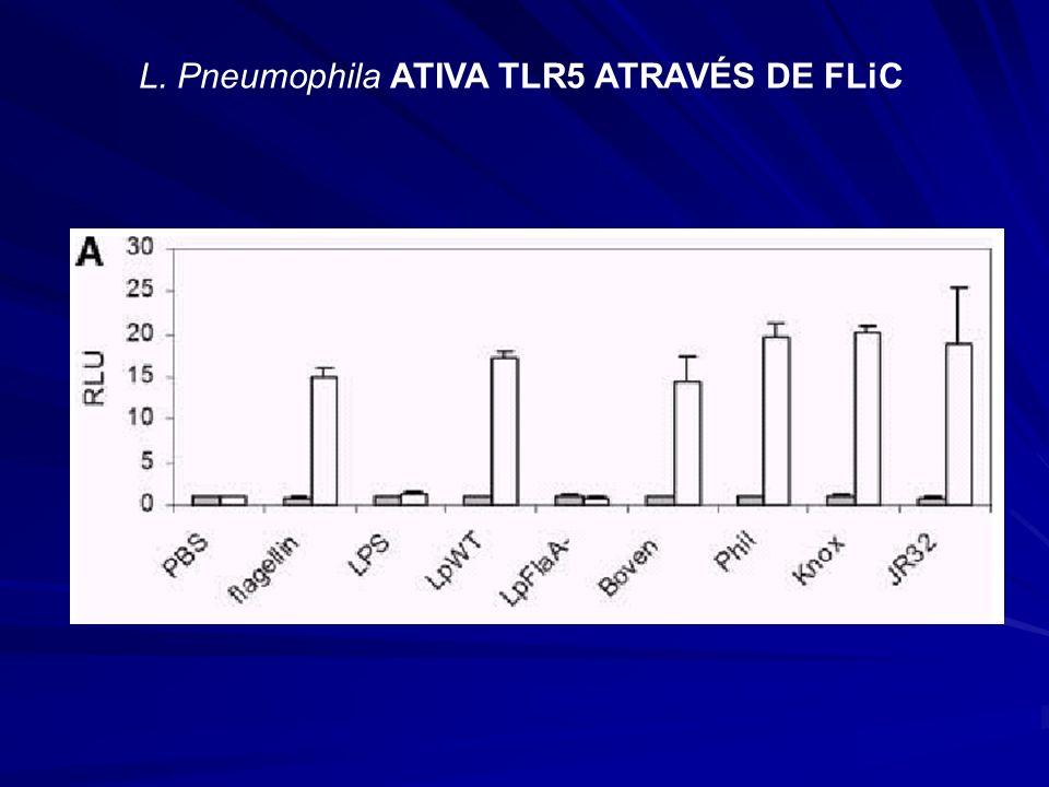 L. Pneumophila ATIVA TLR5 ATRAVÉS DE FLiC