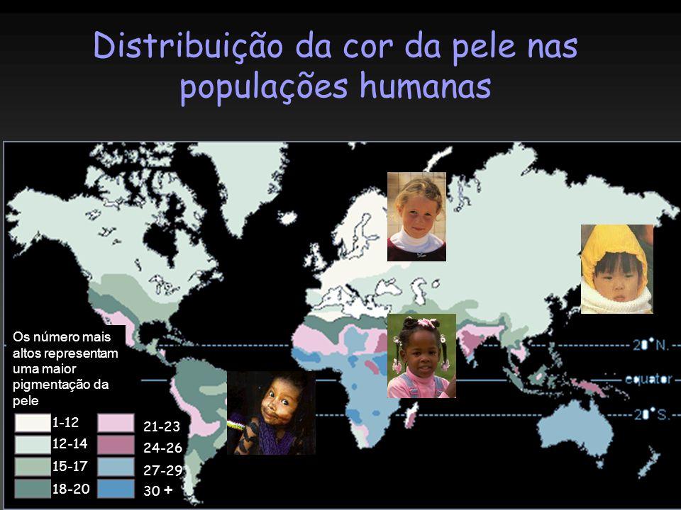 Distribuição da cor da pele nas populações humanas 1-12 12-14 15-17 18-20 21-23 24-26 27-29 30 + Os número mais altos representam uma maior pigmentaçã