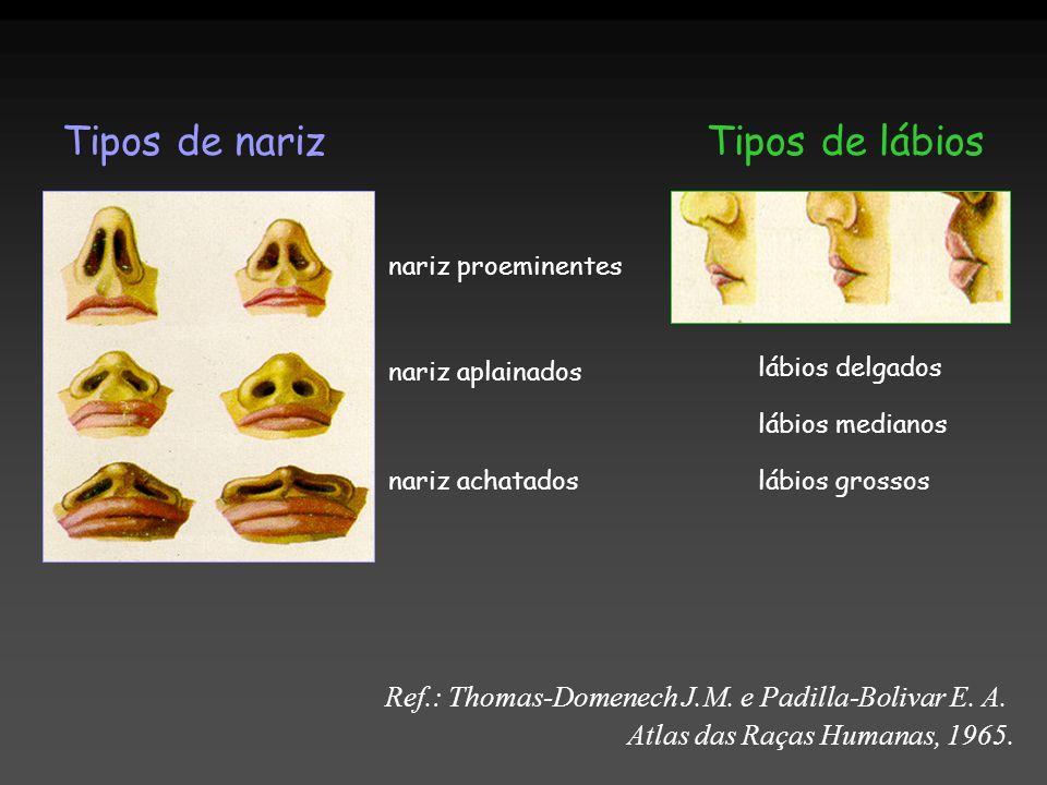 Tipos de narizTipos de lábios Ref.: Thomas-Domenech J.M. e Padilla-Bolivar E. A. Atlas das Raças Humanas, 1965. nariz proeminentes nariz aplainados na