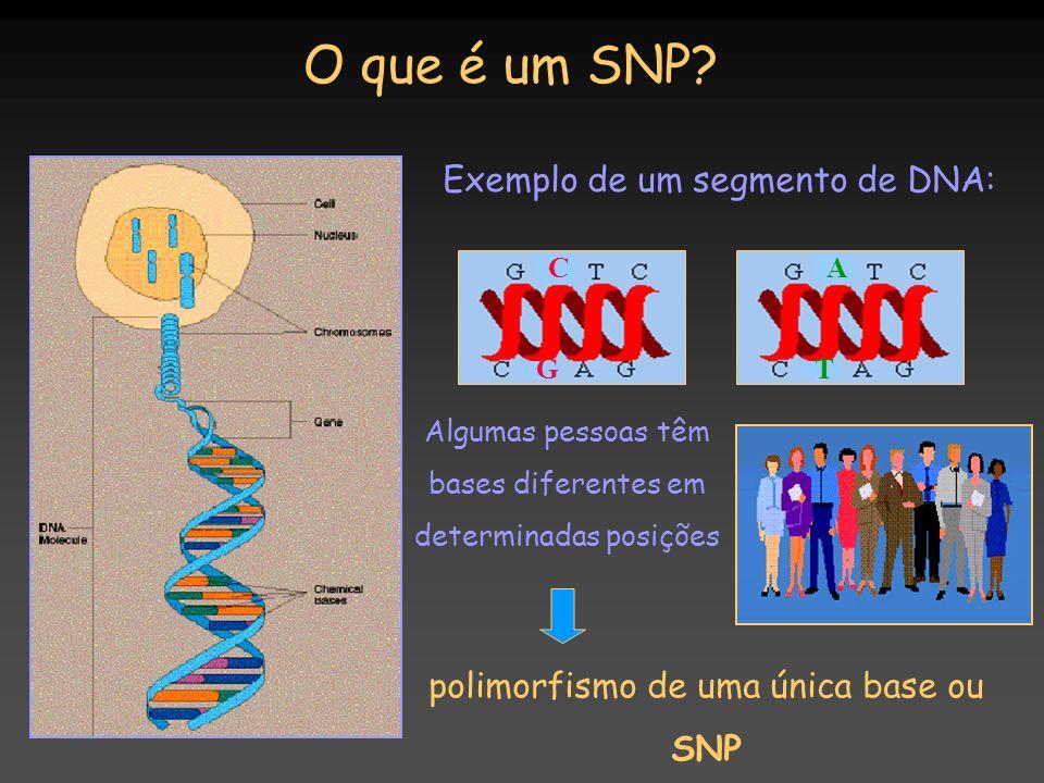 Exemplo de um segmento de DNA: Algumas pessoas têm bases diferentes em determinadas posições polimorfismo de uma única base ou SNP O que é um SNP? C G