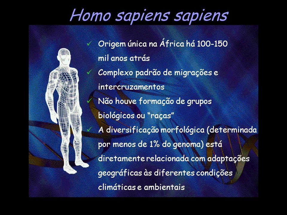Homo sapiens sapiens Origem única na África há 100-150 mil anos atrás Complexo padrão de migrações e intercruzamentos Não houve formação de grupos bio