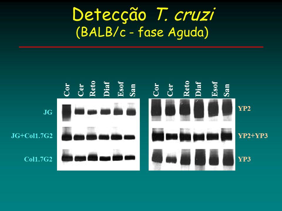 Cor Esof Diaf RetoCerSanYP2YP3 Col1.7G2 Cor Reto Diaf Esof San JG Cer Caracterização T.