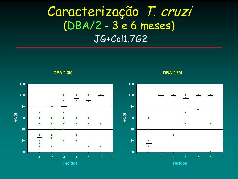 Caracterização T. cruzi (DBA/2 - 3 e 6 meses) JG+Col1.7G2