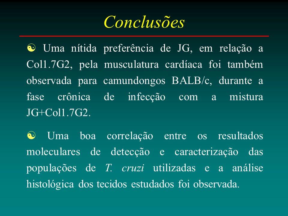 Conclusões Uma nítida preferência de JG, em relação a Col1.7G2, pela musculatura cardíaca foi também observada para camundongos BALB/c, durante a fase crônica de infecção com a mistura JG+Col1.7G2.