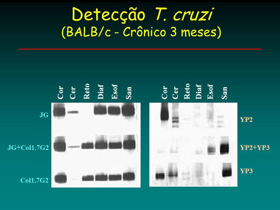 Col1.7G2 Cor Reto Diaf Esof San JGCer Caracterização T. cruzi (Swiss - 6 meses) JG+Col1.7G2