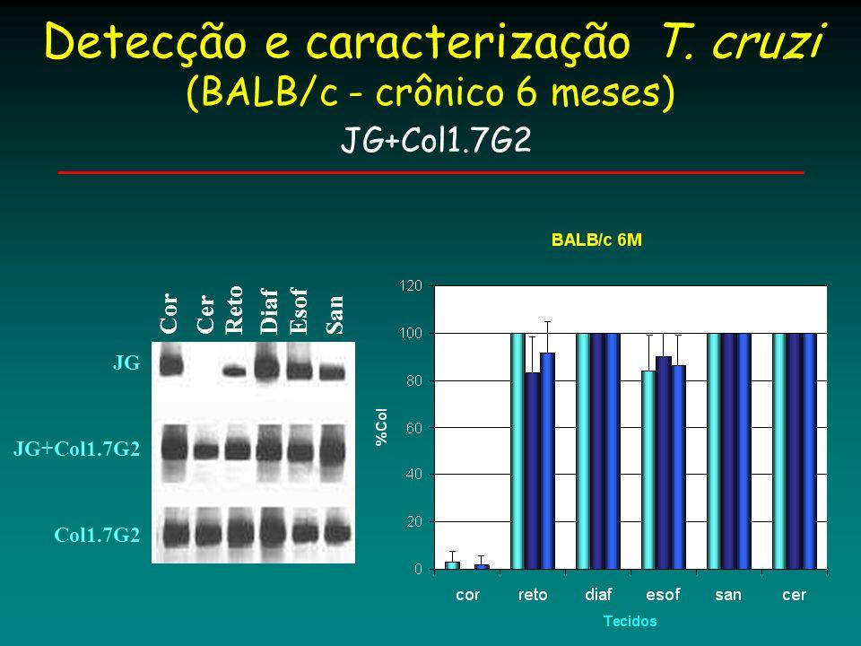 Conclusões Uma distribuição tecidual diferencial foi observada para camundongos BALB/c, durante a fase crônica (3 e 6meses) de infecção com JG ou Col1.7G2, sendo JG aparentemente menos infectivo ao reto em relação a Col1.7G2.