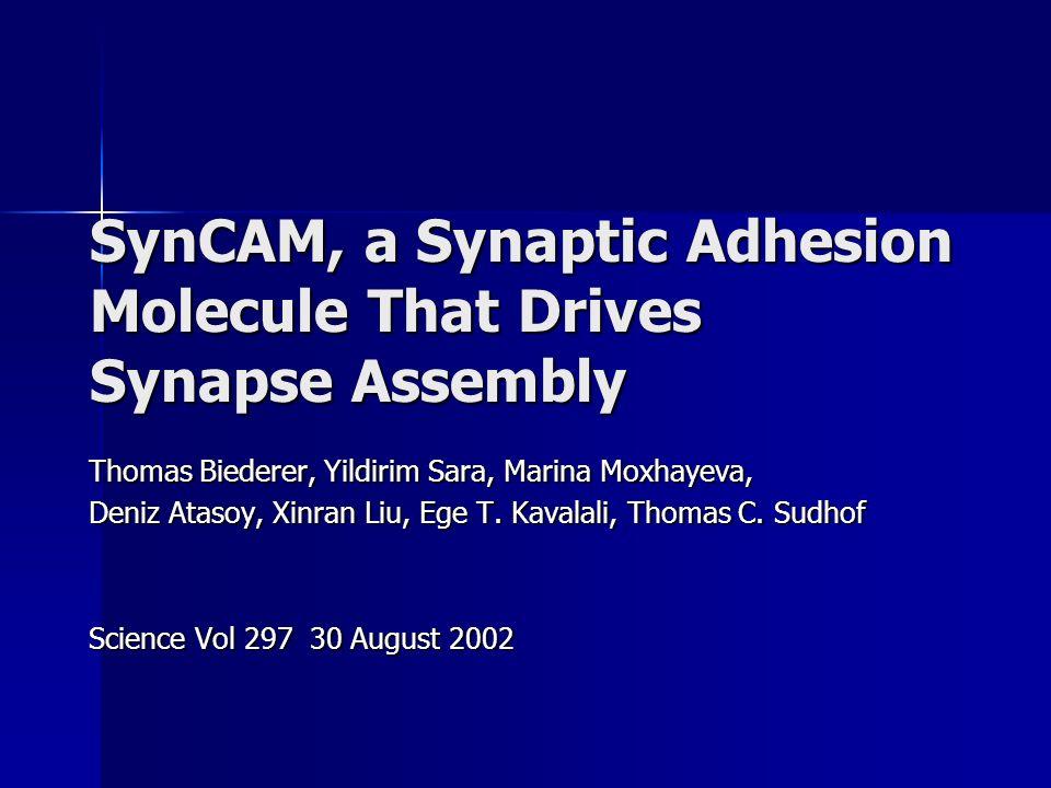 SynCAM, a Synaptic Adhesion Molecule That Drives Synapse Assembly Thomas Biederer, Yildirim Sara, Marina Moxhayeva, Deniz Atasoy, Xinran Liu, Ege T.