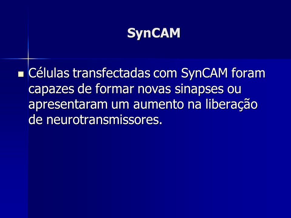 SynCAM Células transfectadas com SynCAM foram capazes de formar novas sinapses ou apresentaram um aumento na liberação de neurotransmissores.