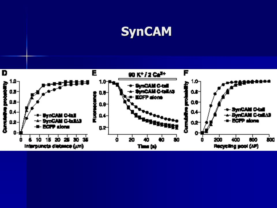 SynCAM
