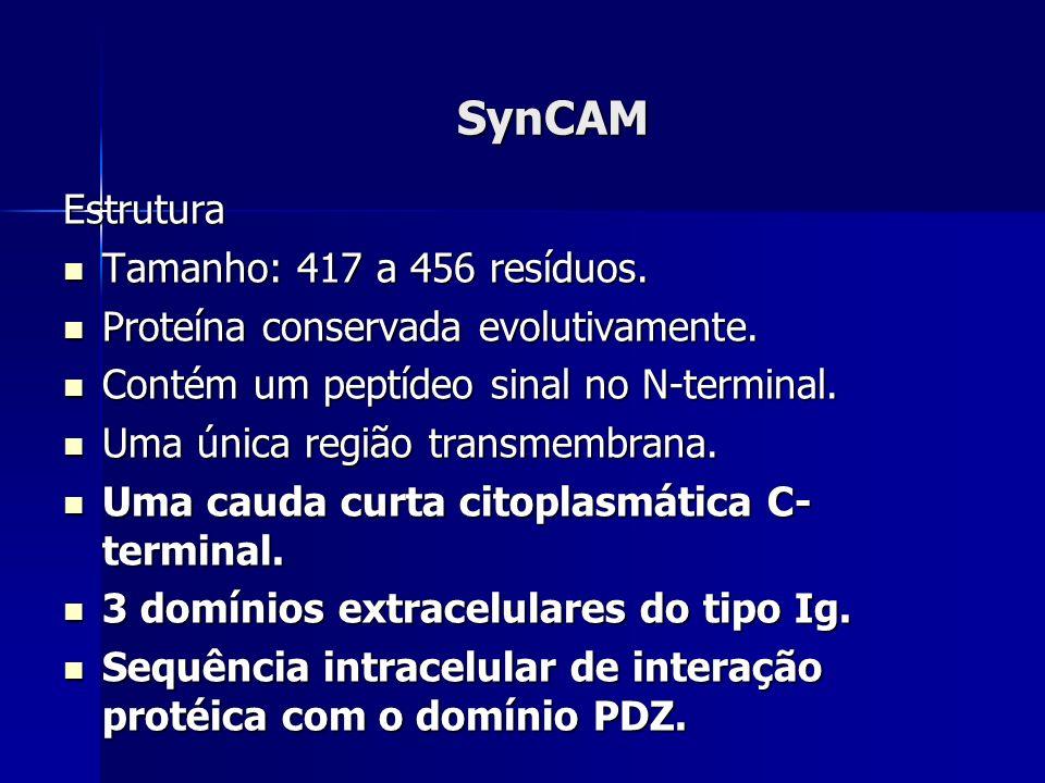 SynCAM Estrutura Tamanho: 417 a 456 resíduos. Tamanho: 417 a 456 resíduos.