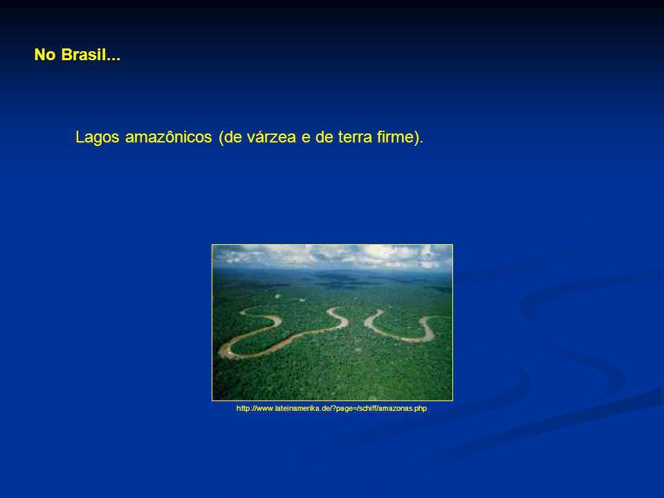 No Brasil... Lagos amazônicos (de várzea e de terra firme). http://www.lateinamerika.de/?page=/schiff/amazonas.php