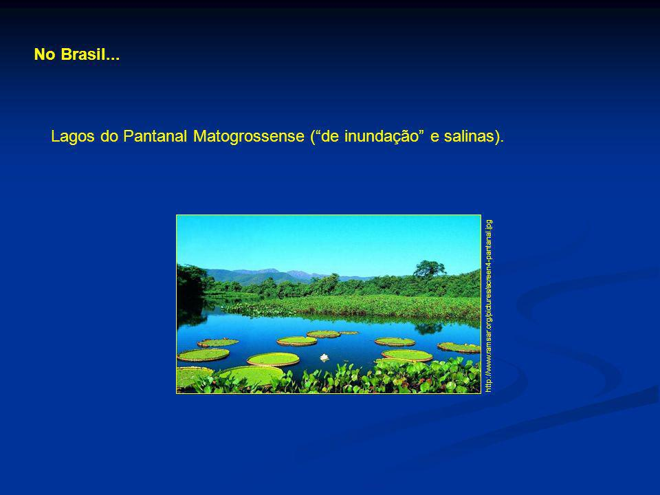 No Brasil... http://www.ramsar.org/pictures/screen4-pantanal.jpg Lagos do Pantanal Matogrossense (de inundação e salinas).