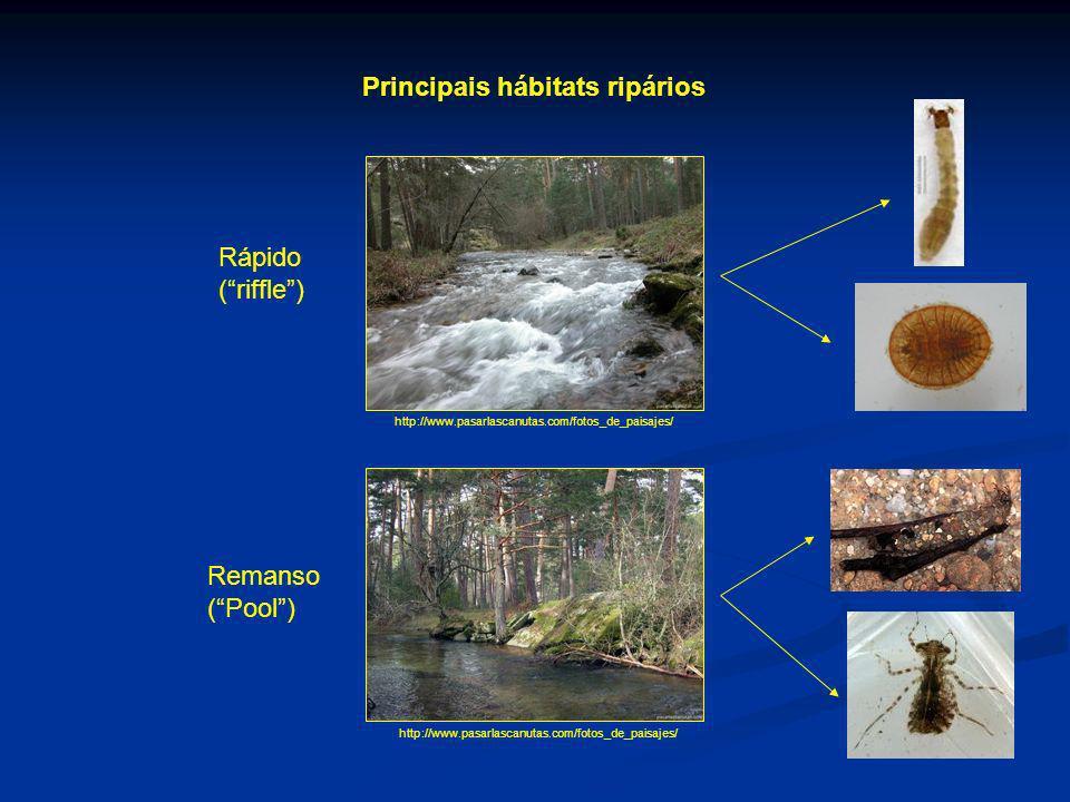Principais hábitats ripários http://www.pasarlascanutas.com/fotos_de_paisajes/ Rápido (riffle) Remanso (Pool)
