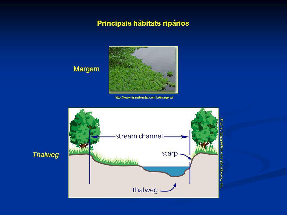 Principais hábitats ripários http://www.lisambiental.com.br/imagens/ http://www.fgmorph.com/images/03/03_14_01.gif Margem Thalweg