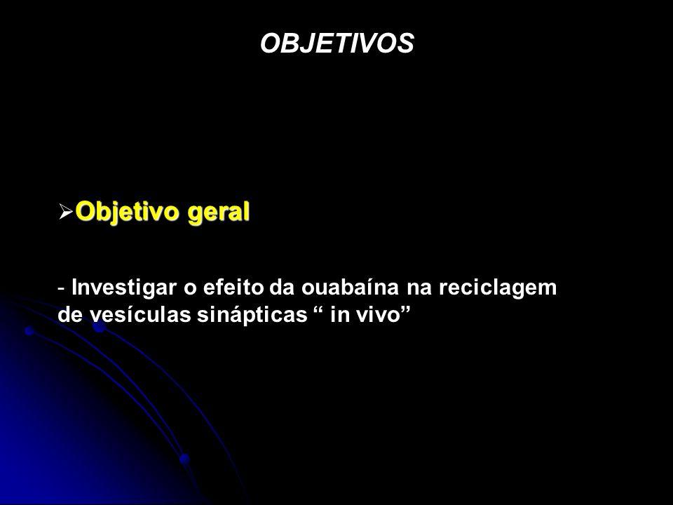 OBJETIVOS Objetivo geral - Investigar o efeito da ouabaína na reciclagem de vesículas sinápticas in vivo