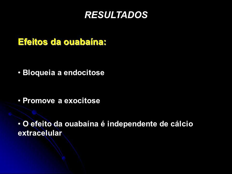 RESULTADOS Efeitos da ouabaína: Bloqueia a endocitose Promove a exocitose O efeito da ouabaína é independente de cálcio extracelular