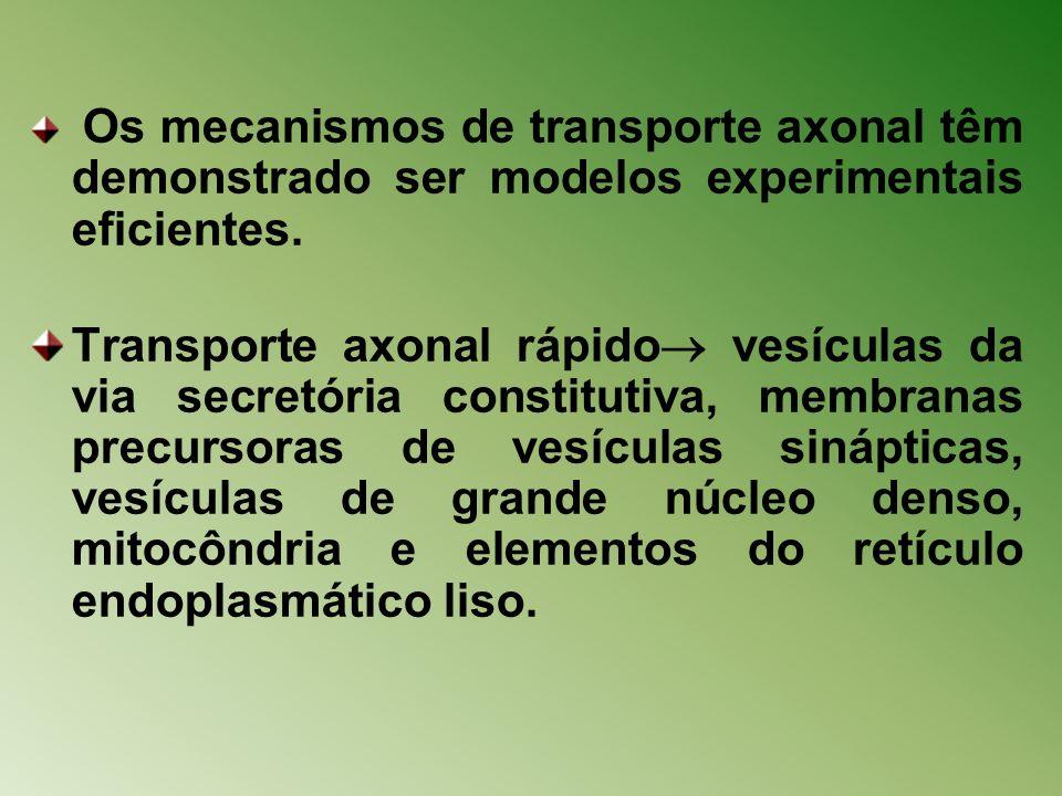 Os mecanismos de transporte axonal têm demonstrado ser modelos experimentais eficientes. Transporte axonal rápido vesículas da via secretória constitu