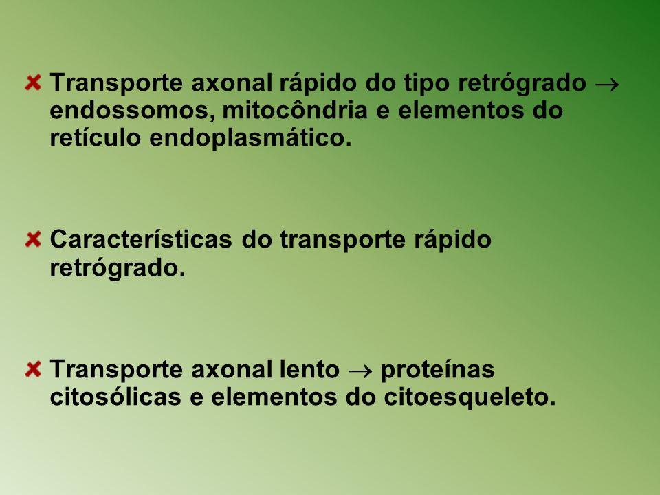 Transporte axonal rápido do tipo retrógrado endossomos, mitocôndria e elementos do retículo endoplasmático. Características do transporte rápido retró