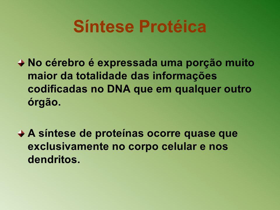 Síntese Protéica No cérebro é expressada uma porção muito maior da totalidade das informações codificadas no DNA que em qualquer outro órgão. A síntes
