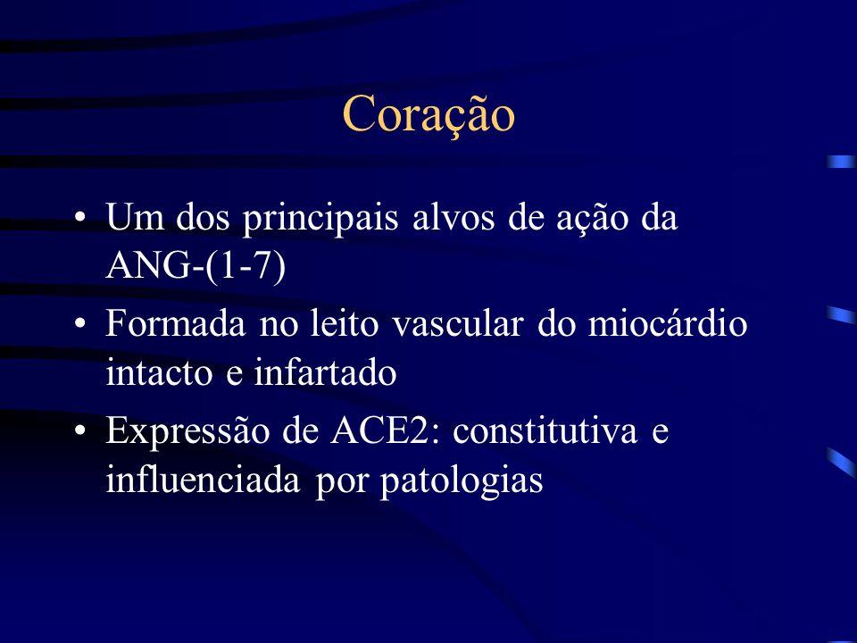 Coração Um dos principais alvos de ação da ANG-(1-7) Formada no leito vascular do miocárdio intacto e infartado Expressão de ACE2: constitutiva e influenciada por patologias