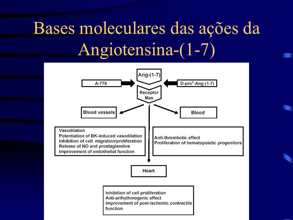 Bases moleculares das ações da Angiotensina-(1-7)