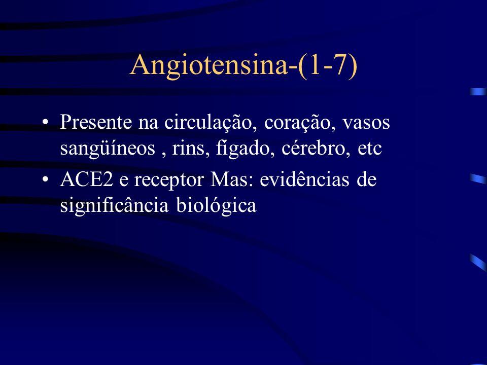 Angiotensina-(1-7) Presente na circulação, coração, vasos sangüíneos, rins, fígado, cérebro, etc ACE2 e receptor Mas: evidências de significância biológica